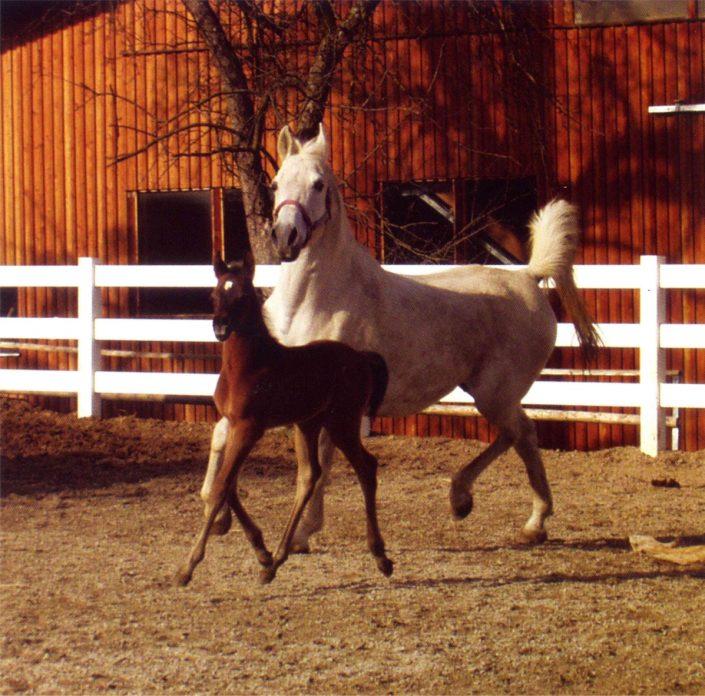 T&F Golpla Equiground® paarden